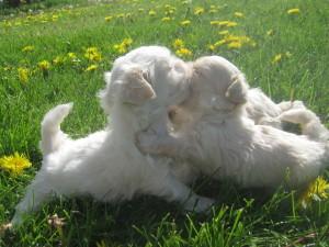 Bugs pupies 074