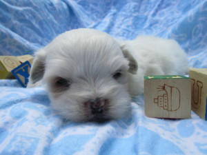 A Sweet Buttercup Baby! Sorry, he is no longer available.