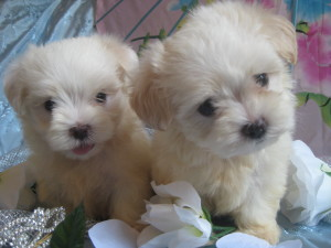 Candys pups August 5 035