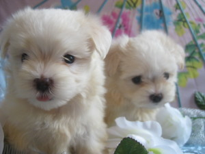 Candys pups August 5 037