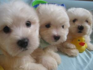 susans pups August 5 041