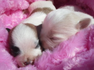 Ruthy's puppies 008